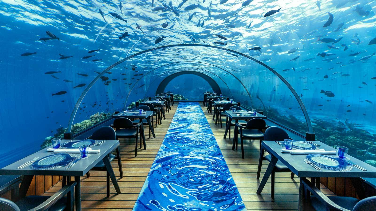 способствует подводный ресторан в москве фото николая баскова